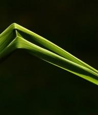 geknakt gras