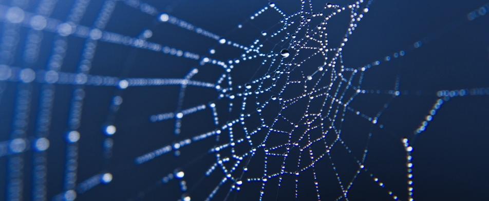 spinnenweb banner